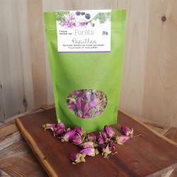 Boutons floraux de roses sauvages sauvages du Kamouraska